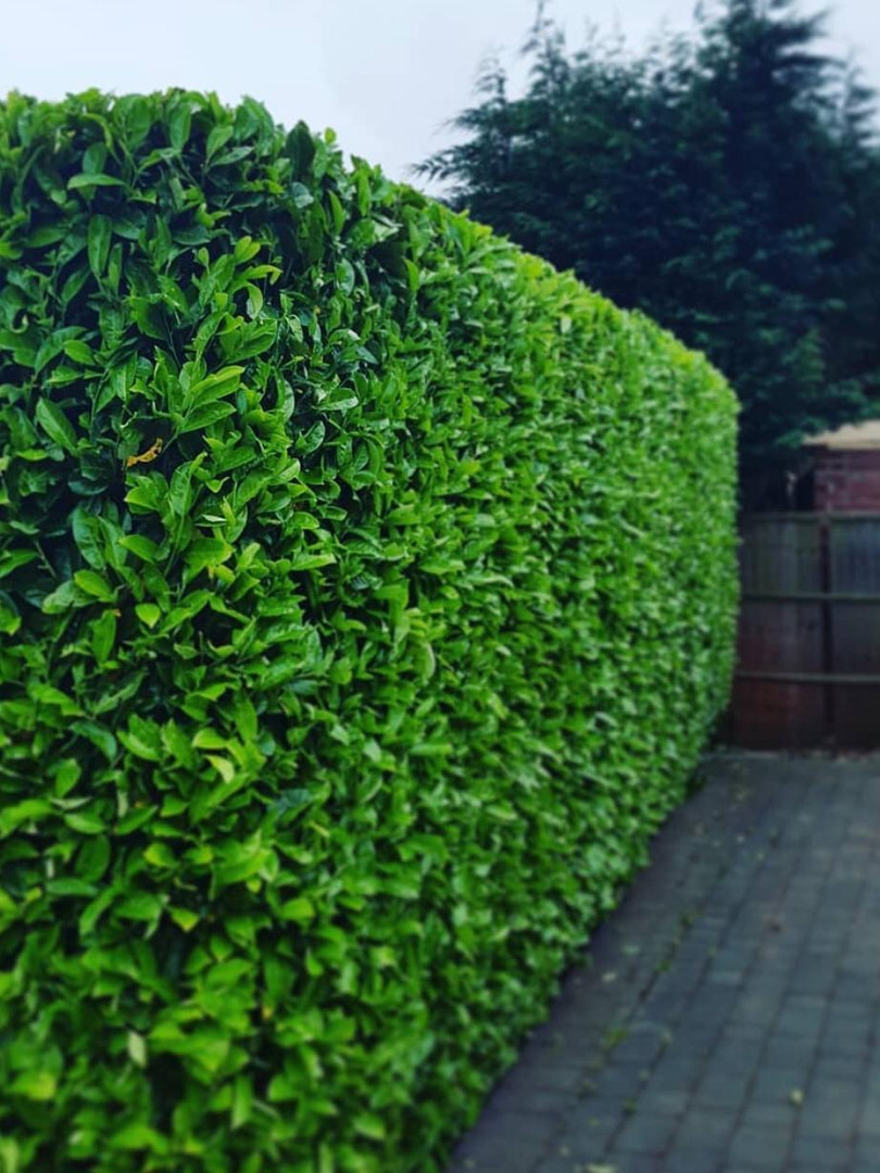 Hedge Trimming in Coventry