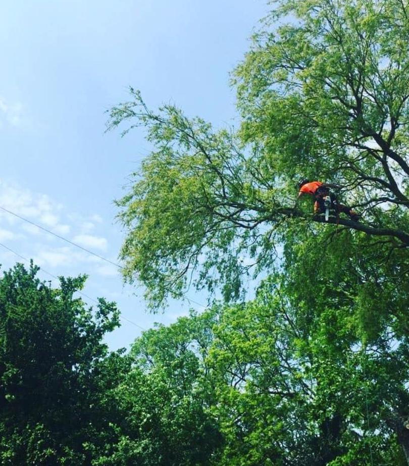 Tree Surgeon Coventry