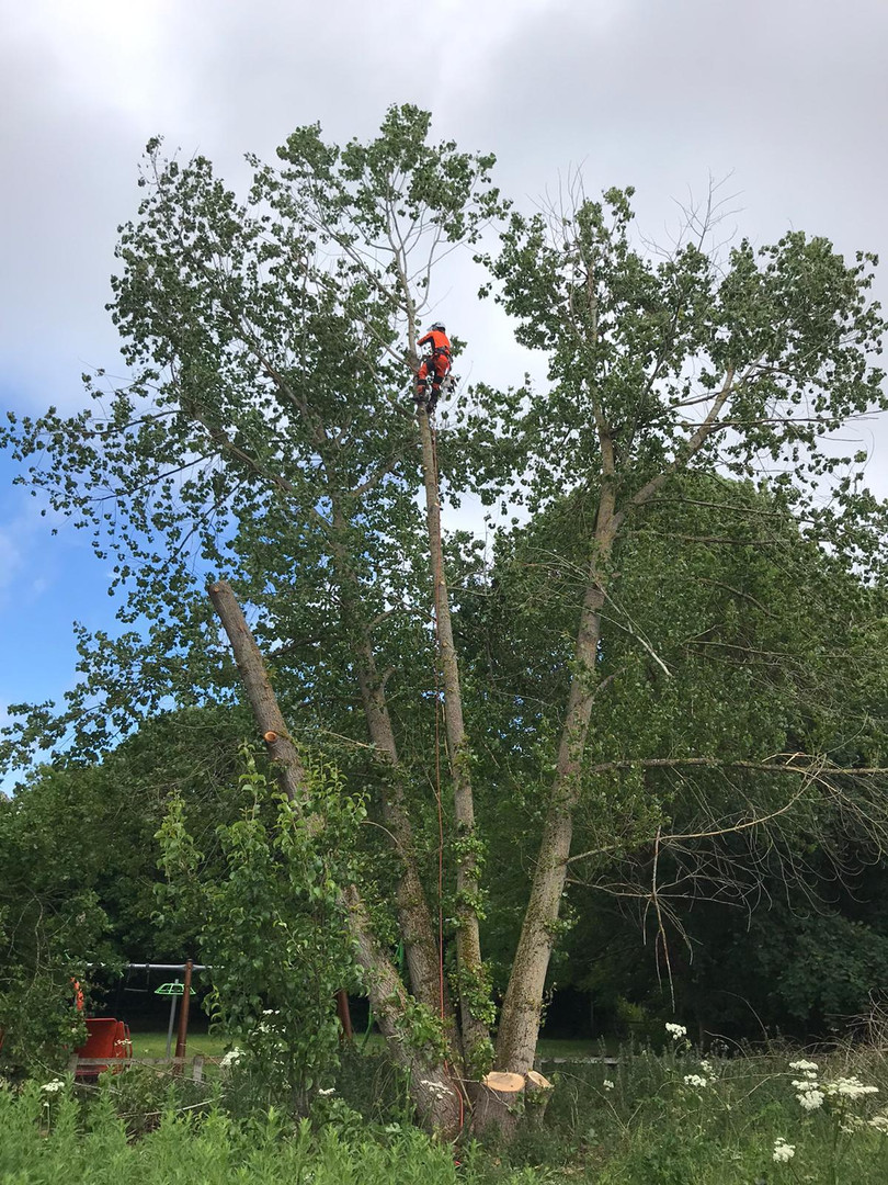 Tree removal services in Warwickshire