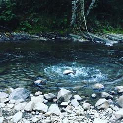 Oregon Salmon