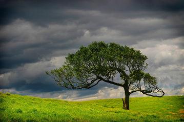 Mt Mee Tree