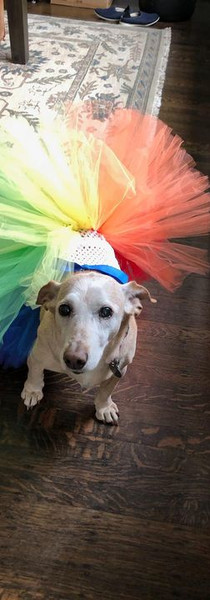 Happy Quinceanera, Scout!