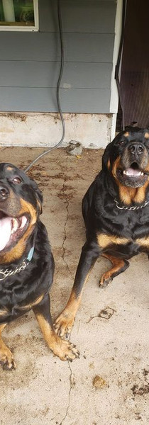 Rufus and Ajax are so handsome!