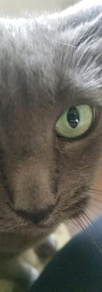 Pokie loves to chew meowt!