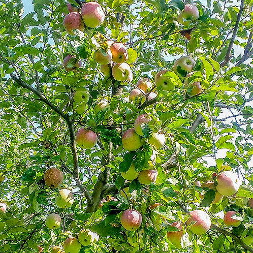 Fructe Eco din Țara Hațegului