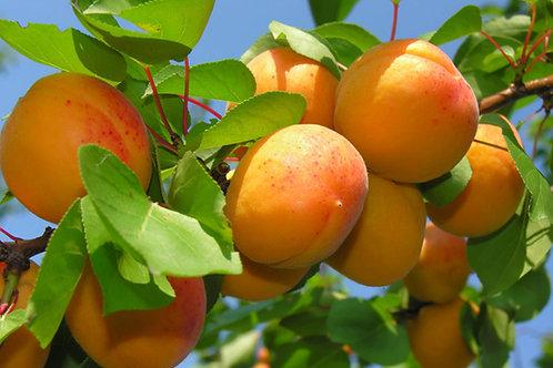 Fructe Eco din Țara Zarandului