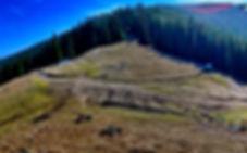 Culmea Cepasului_edited_edited.jpg