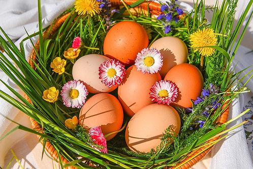 Ouă de la ferma de găini ouătoare Birtin