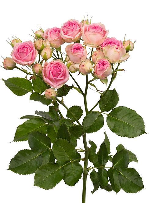 Trandafiri de seră din inima Zarandului