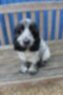 Austin the dog