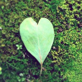 loveleaf.png