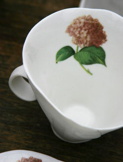 A Fly Cup