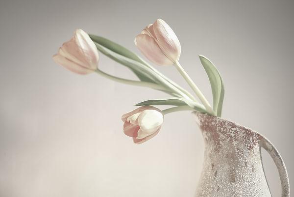 B2-Tulips-AnnaD.JPG