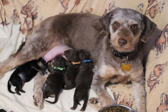 Twix with her puppies. She's such a good momma!