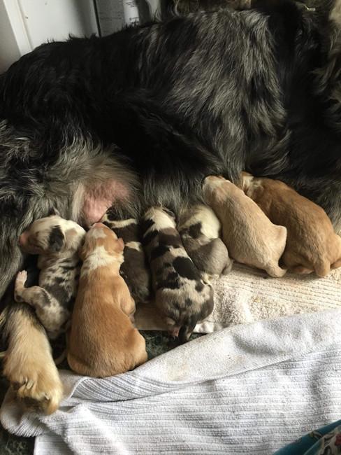 Memphis & littermates 3 days old