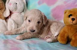 'Macaroon' 3.5 week old
