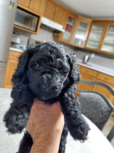Zorro @ 4 weeks old