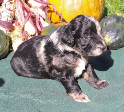 'Fox' 3.5 weeks old