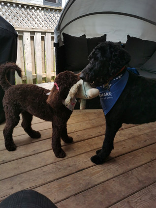 Playing tug with her 'brother' Emit