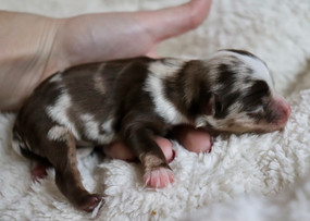 Eve @ 1 day old