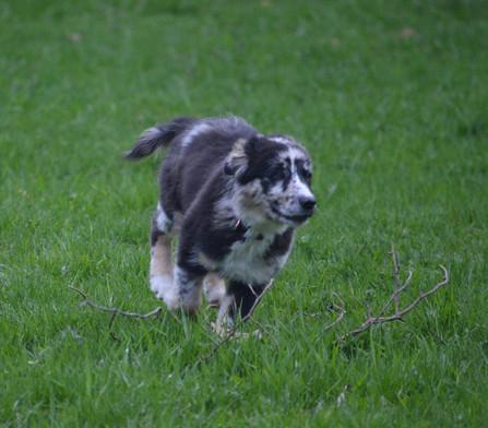 Run Layla, Run!