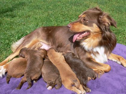 Good Momma!