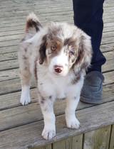 Cleo @ 9 weeks old
