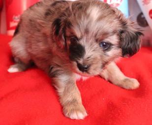 'Oakley'  @ 4 weeks old