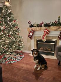 Mezzo's 1st Christmas