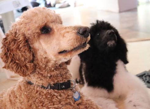 Maisie & her little 'sister' Luna