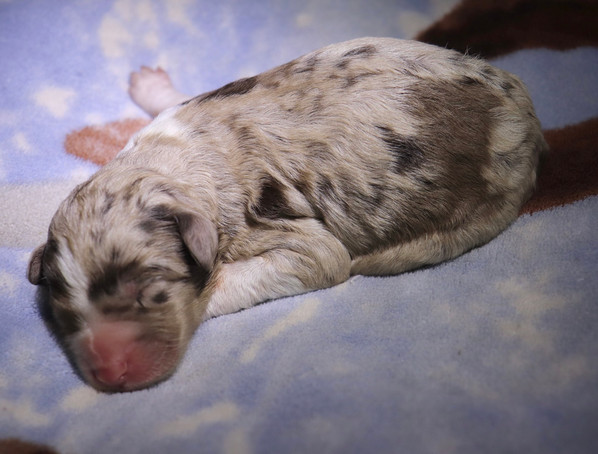 Storm @ 1 day old