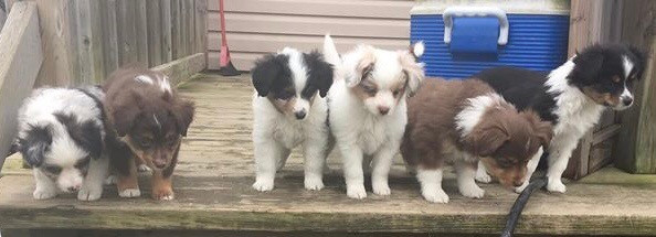 Rocket with all his littermates