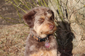 Sasha & Benjie's Puppy