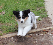 Rocket Playing Outside @ 10 weeks old