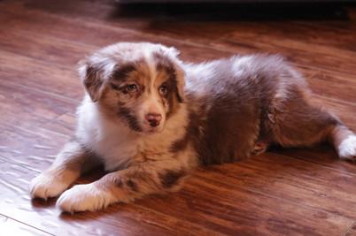 Phoebe @ 9 weeks old