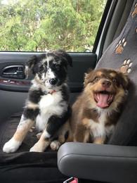 Sasha & Layla