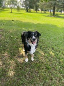 Layla - 'Throw the ball!'