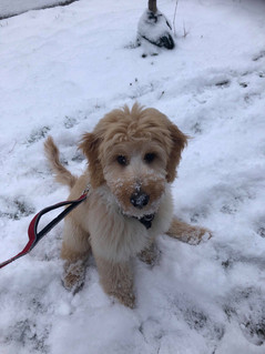 Maisie & Memphis Puppy