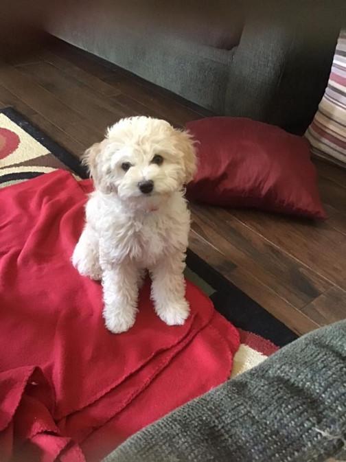 Twix & Tobi's F1b Moyen Pup