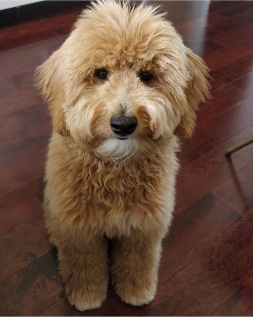 Twix & Tobi Puppy @ 6 months old