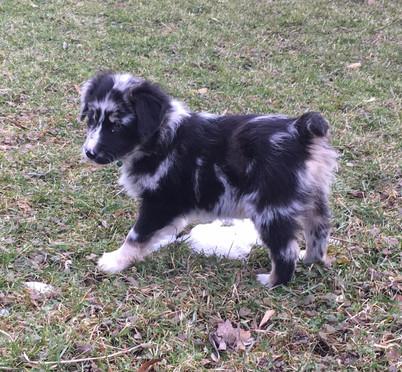 Puppy Layla