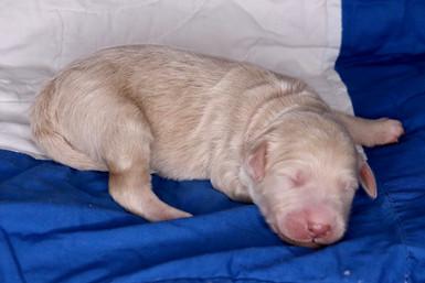 Macaroon @ 5 days old