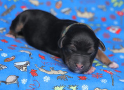 Tacoma @ 1 day old