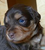 Twix @ 3 weeks old