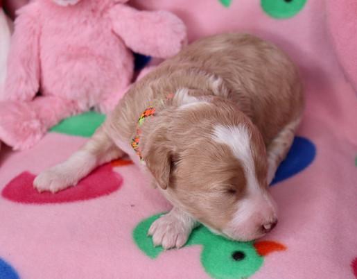 Mozzarella @ 10 days old