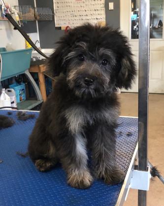 Izzy & Cooper's Puppy