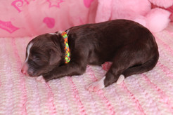 Tonks @ 1 day old