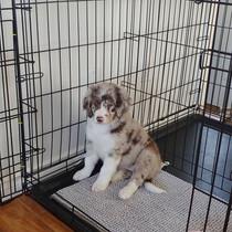 Cleo @ 8 weeks old