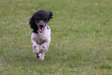 Run Tux, Run !