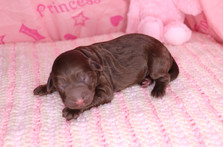 Hermione @ 1 day old